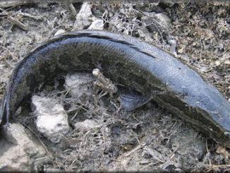 змееголов это